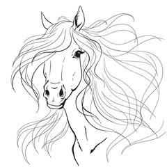 Horse portrait. A horse's mane. Black lines on a white background.