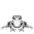 the frog sits symmetrical sketch vector graphics black and white drawing