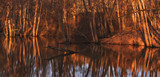 Swamp or small lake with reflections in warm vivid colors during spring and evening hours. Sweden