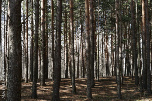Fotobehang Lente forest