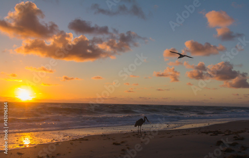 Birds At Sunrise Poster