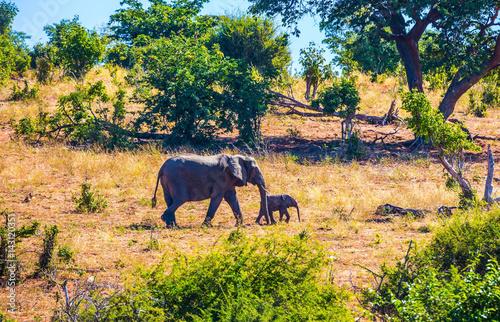 Poster Elephants in Kruger National Park