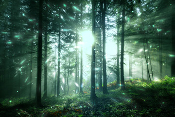 Magical sunlight in the foggy sunny forest landscape with firefly light. Lovely fairytale woodland. © robsonphoto