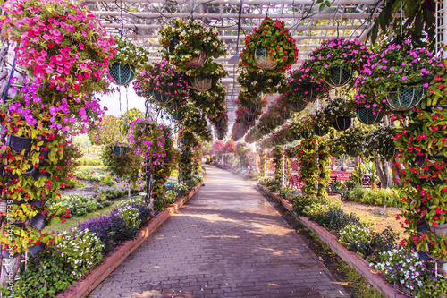Papiers peints Lavende Flower tunnel arch in the summer