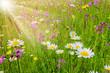 Quadro Bunte Blumenwiese im Frühling und Sonnenstrahlen