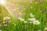 Bunte Blumenwiese im Frühling und Sonnenstrahlen - 143138115