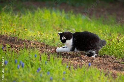 Katze jagt Maus im Garten