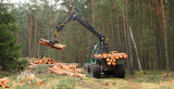 The harvester working in a forest. Harvest of timber. Firewood as a renewable energy source. Agriculture and forestry theme.  - 143159168