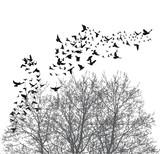 Silhouette flying birds vector illustration - 143177118