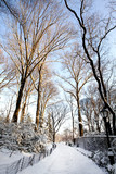 Central Park, New York. Beautiful park in beautiful city. - 143200309