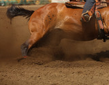 A bay horse sliding in the dirt in an up close horizontal presentation. Barrel racing, rodeo, action equine, competing sports.