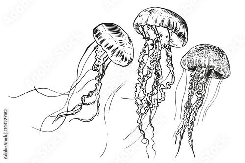 Fototapeta Hand drawn jellyfish. Vector illustration. Sea collection.