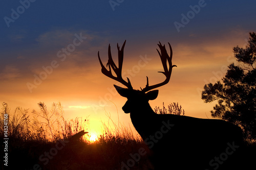 Mule Deer Sunset Poster