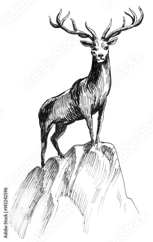Deer on the rock - 143242596