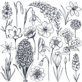 Fototapety Collection of hand drawn spring flowers and plants.