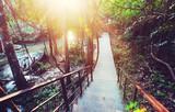 Boardwalk in jungle