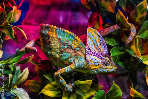 Exhibition of terrarium animals in Uzhhorod