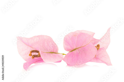 Foto op Plexiglas Magnolia Bougainvillea isolated on white background