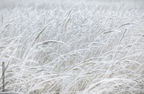 Blurred Pastel Winter Background - 143323706