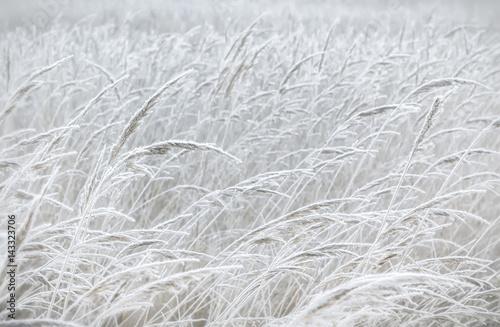 Blurred Pastel Winter Background - 143323706