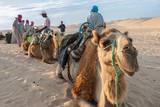 Caravan of camels on holiday in the desert
