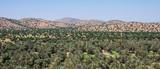Panorama de la palmeraie de Tiout, Taroudant, Maroc