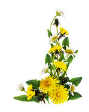 Dandelion and daisy flowers corner arrangement
