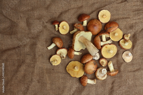 A heap of edible  mushrooms  (Suillus granulatus, white mushroom  ) on the bast mat ( crumpled bagging ) Poster
