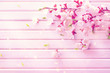 Spring blossom on white wooden plank background. Pink blooming apricot flowers