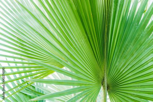 line pattern Palm leaves, Ornamental plants Poster