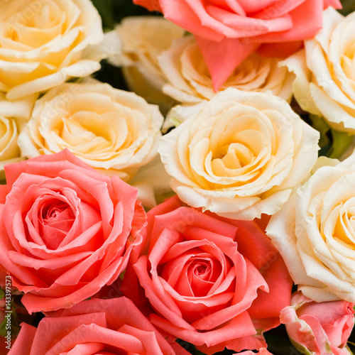 Floral background of bush roses. Copy space