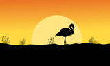 Silhouette of flamingo at sunset landscape