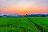 Rice field Mae Kon at sunset in Chiang Rai,Thailand