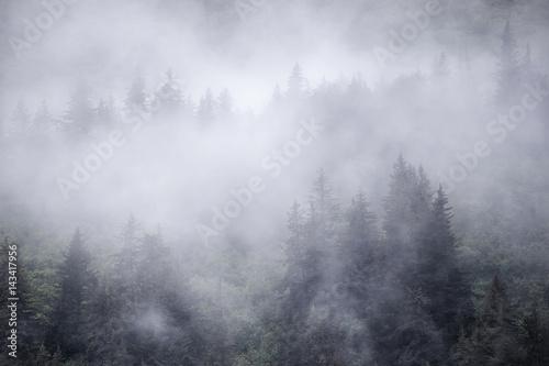 Spruce trees in coastal fog in Alaska