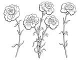 Carnation flower graphic black white isolated sketch illustration vector - 143437320