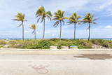 Palm trees in Hollywood Beach, Florida