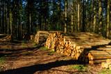 Forstwirtschaft - 143447981