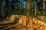 Forstwirtschaft - 143448559