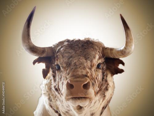 Primer plano de toro bravo