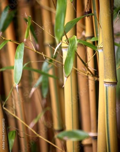 Bambus Wäldchen Stämme mit Blättern Poster
