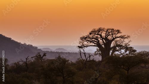 Papiers peints Baobab Landscape with Baobab in Kruger National park, South Africa