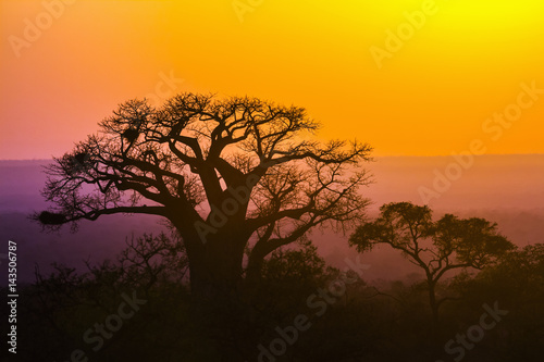 Aluminium Baobab in Kruger National park, South Africa