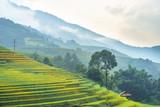 Rice fields on terraced of Mu Cang Chai, Yen Bai, Vietnam