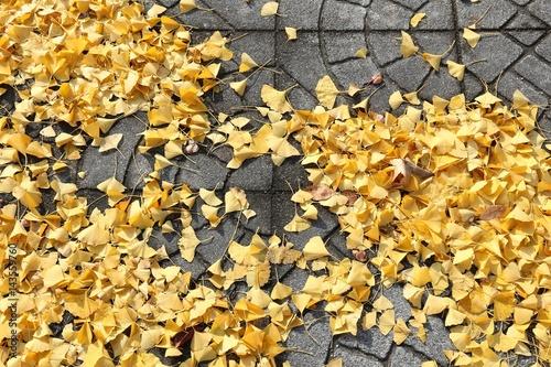 Fall season in Japan - garden in Osaka Poster
