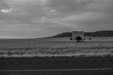 Prairie Landscape with Solitary Tree and Wall in Black and White, Free State, South Africa