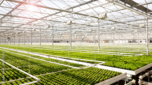 Greenhouse with cultivation