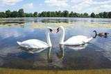 United Kingdom Hyde Park Swan Lake