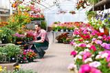 Gärtnerei / Blumenhandel - Gärtner arbeitet in einem Gewächshaus  - 143652942