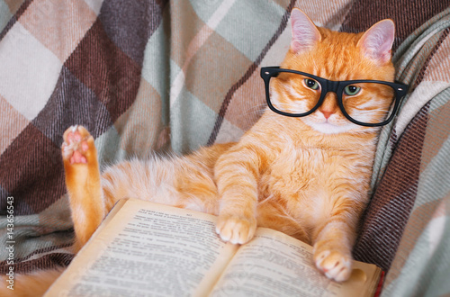 Poster Red cat in glasses lying on sofa with book