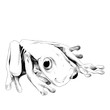 little frog is sitting, sketch, vector graphics black and white drawing